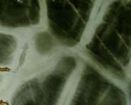 Detallo técnico: Turtle, cuarcita natural pulida brasileña