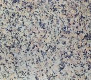 Detallo técnico: TS 016, granito natural flameado chino