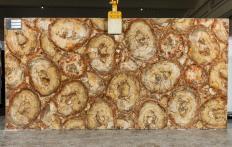 Suministro planchas pulidas 2 cm en piedra semi preciosa natural PETRIFIED WOOD BROWN TL0142. Detalle imagen fotografías