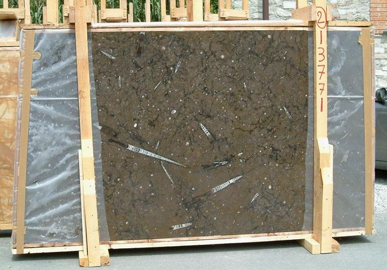 MARRON FOSSIL Suministro (Italia) de planchas pulidas en mármol natural E-13771