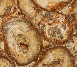 Detallo técnico: PETRIFIED WOOD BROWN, piedra semi preciosa natural pulida de Namibia