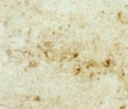 Detallo técnico: PIERRE DE NOYANT DEMI-FINE, arenisca natural mate francesa