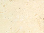 Detallo técnico: AJLOUN BRIGHT, caliza natural pulida jordana