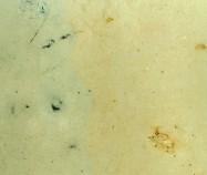 Detallo técnico: VALE AMAZONA, caliza natural pulida portuguesa