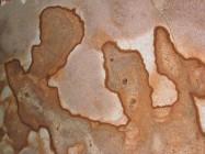 Detallo técnico: GOLDEN MOON, granito natural pulido brasileño