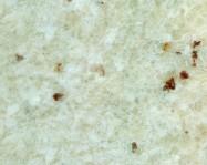 Detallo técnico: WHITE TYPE ROMANO, granito natural pulido brasileño