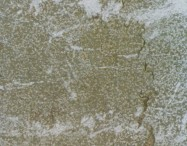 Detallo técnico: LUX SAN MARCO, mármol natural amartillado italiano