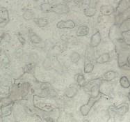 Detallo técnico: DOLOMIT KALKSTEIN, mármol natural mate alemán