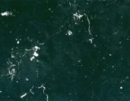 Detallo técnico: DINANT BLACK, mármol natural pulido de Bélgica