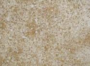 Detallo técnico: NILE YELLOW, mármol natural pulido egipcio