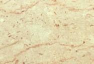 Detallo técnico: PERLATO SICILIA  F, mármol natural pulido italiano
