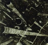 Detallo técnico: FOSSIL BLACK, mármol natural pulido marroquíno