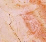 Detallo técnico: R.B., mármol natural pulido palestino