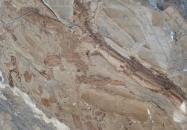 Detallo técnico: ILLUSION BRONZE, mármol natural pulido turco